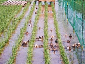 JAようてい水稲生産組合ニセコ支部